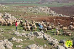 Make Rojava Green Again - February 2018