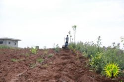 Images from the Make Rojava Green Again campaign for May 2018