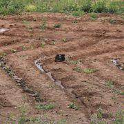garden after the rain